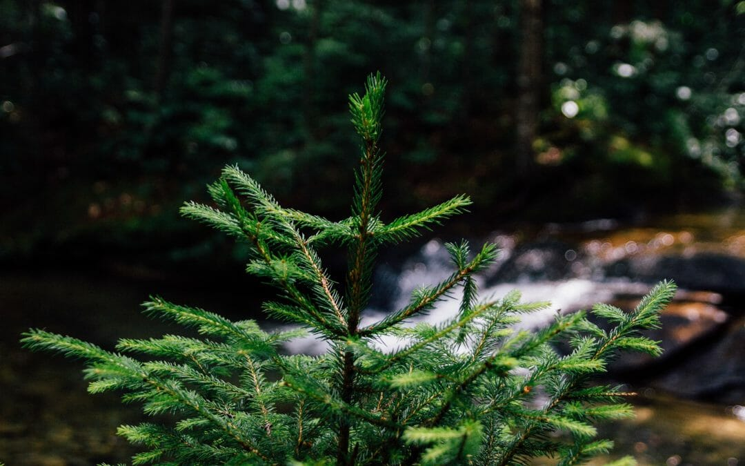 Sustainability at Christmas
